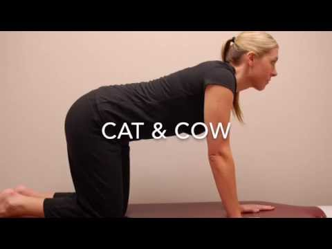 lower back exercises cat n cow  youtube