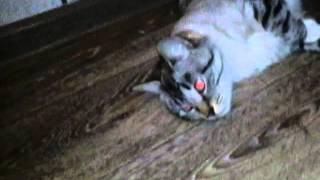 Фильм ужасов!12+ правда ночи кошки.