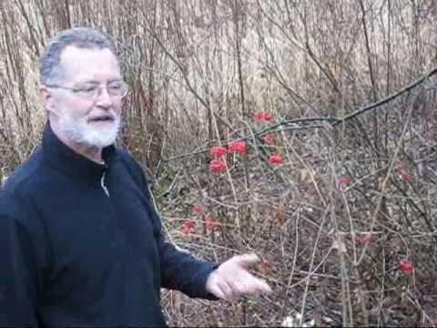 Highbush Cranberry With John Latimer