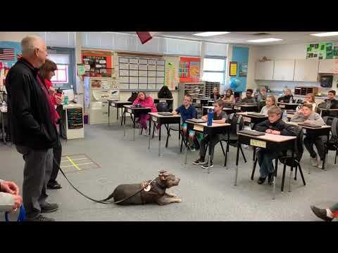Dolly the Pit Bull at Four Peaks Elementary School, Fountain Hills, AZ