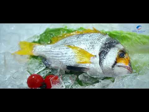 The Deep Seafood company L L C food1986 to 2018