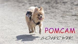Pomcam Test (gopro Dog Pomeranian)