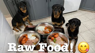 Raw Food Diet for Dogs! 3 Rottweilers Eating Raw Meals
