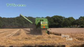 Combine - Tarweoogst Uddel - Harvesting in the Netherlands