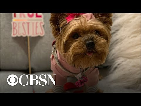 Chris Davis - DOGS go SPEED DATING to Find Their PERFECT Valentine's Match!