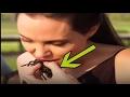انجلينا جولي وجبتها المفضلة الصراصير والعناكب ثقافة حول العالم