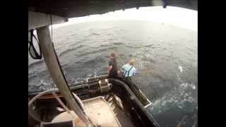 Albacore Tuna bait fishing F/V Pacific Gem