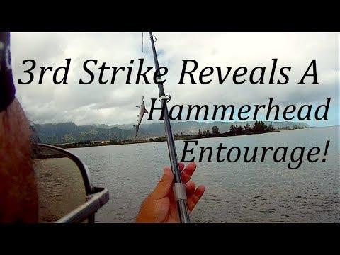 3rd Strike Reveals A Hammerhead Entourage!