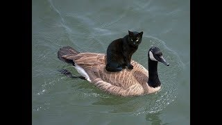Cats Make Friends With Other Animals - Funny Cat Video😂