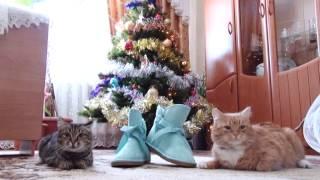 Александр и Людмила, сборы невесты, Венгерово, 2014