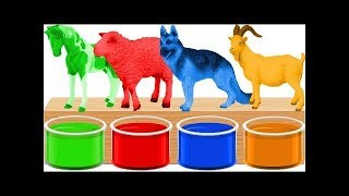 Learn animals for kids with Baby Dance l Colors Farm Animals Video and Baby Dance l Ranka TV