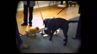 Dog Training - Paws Obedience Training