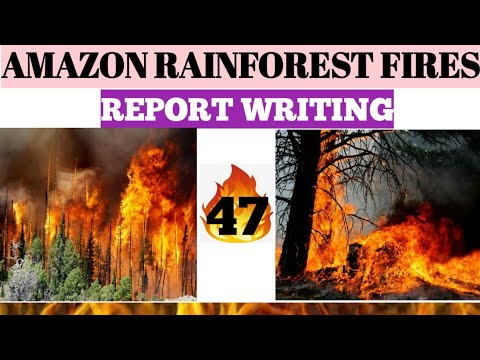 amazon rainforest fires report writing for psc clerkship miscellaneous icds
