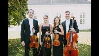 SUGAR OFFICE presents: Streichquartett (Klassik | Pop | Wunschsongs | Traditionelles)