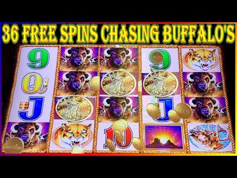 ✩  CHASING THE BUFFALO HEADS 36 Free Spins ✩  BUFFALO GOLD COIN SHOW ✩  Slot Machine Pokies ✩