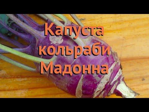 Капуста кольраби Мадонна (madonna) 🌿 капуста Мадонна обзор: как сажать семена капусты Мадонна