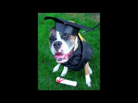 Funny Dogs Graduation Celebration Youtube