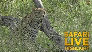 Hosana Punches Above his Weight Class thumbnail