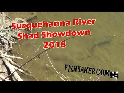 Susquehanna River Shad Showdown 2018: Havre de Grace, Maryland