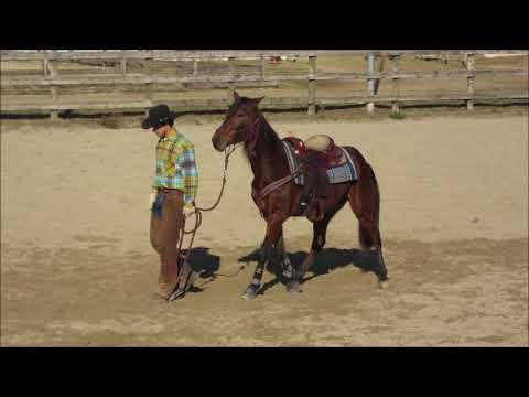 ATH Cavalli in vendita - NEBRASKA PISANA