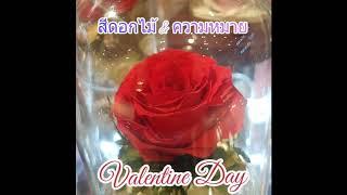 วาเลนไทน์ กับดอกกุหลาบแดง มนต์เสน่ห์ที่สาว ๆปรารถนา