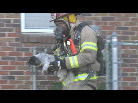 PRE-ARRIVAL - Firefighters rescue 4 dogs from burning house