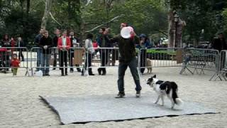 Animal Planet's Super Fetch Zak George and Venus in New York City (Part 2)