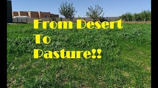 Turning Desert Land Into Pasture
