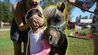 SURPRISING OUR 3 YEAR OLD WITH A REAL PONY!!