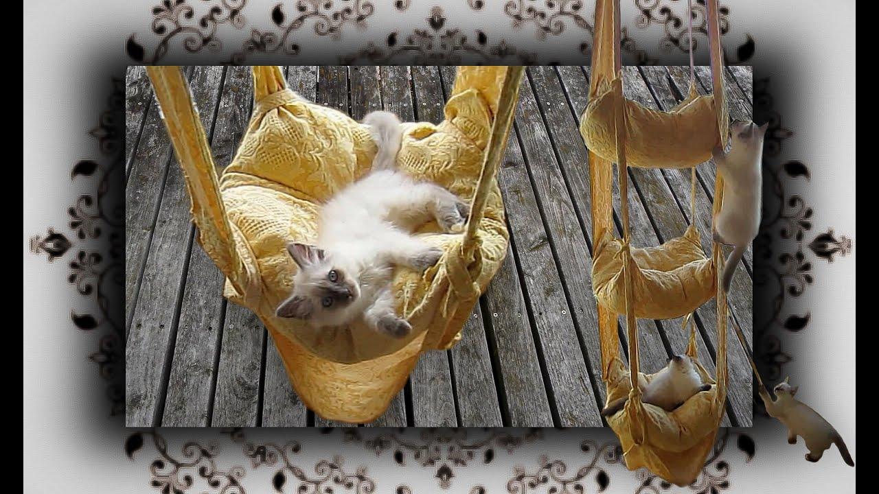 diy h ngekissen schaukel f r katzen handmade cats trapeze youtube. Black Bedroom Furniture Sets. Home Design Ideas