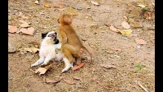 OMG ! What does orphan monkey Axel try to do with adorable pupy ? thumbnail