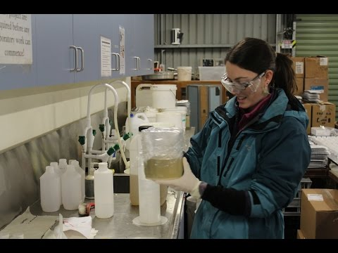 Fecal Indicator Bacteria (FIB) Removal in Biofilters