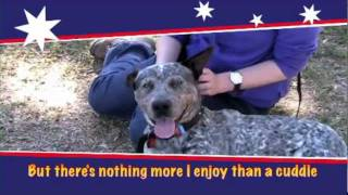 Rspca Qld Fairfield Adopt A Pet - Dazza Is An Energetic Australian Cattledog.mov