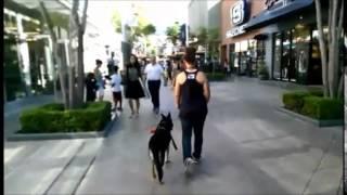 Orange County Dog Trainers; Heidi 1 Year Old Gsd