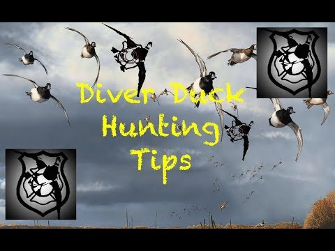 Diver Duck Hunting Tips