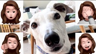 The Truth About Greyhound Adoption [10 things they don't tell you]