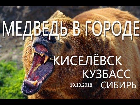 МЕДВЕДЬ В ГОРОДЕ. Сибирь. Кузбасс.  Киселёвск. Обувная фабрика.