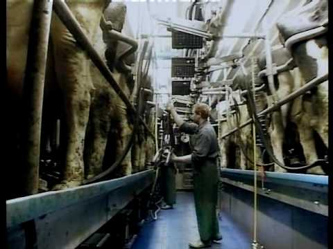 Family Farm Parlors   DeLaval Automated Milking Solutions   DeLaval