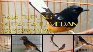 Video 081386333136,Jual burung murai batu medan asli murah,berkualitas,bagus di jakarta indonesia download MP3, 3GP, MP4, WEBM, AVI, FLV Maret 2018