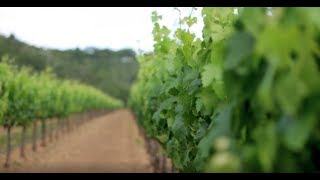 Explore California Wine Country| Sotheby's International Realty
