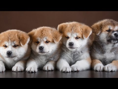 cutes-dogs-lovely-baby-dogs-and-funny-video-try-not-to-laugh---animal-life