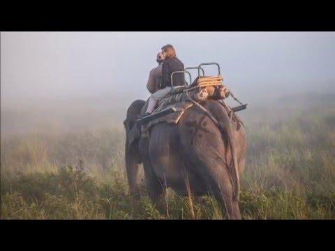 viaje-a-la-india,-vida-salvaje.-safari-en-kaziranga