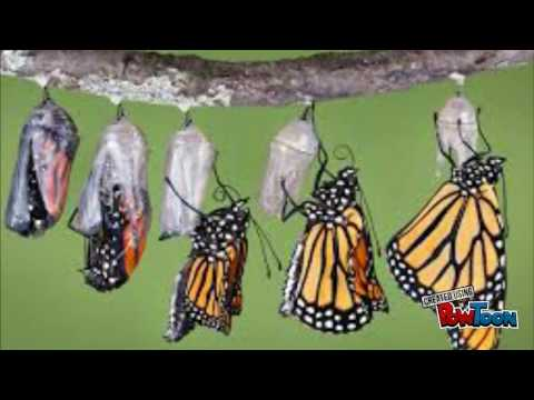 Learn Life Cycle of a Butterfly through Young Scientists
