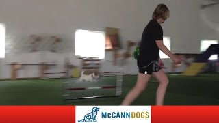 Dog Agility Training: Basic Agility Class June '12
