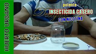 #HuertoUrbano. Potente insecticida casero de nicotina