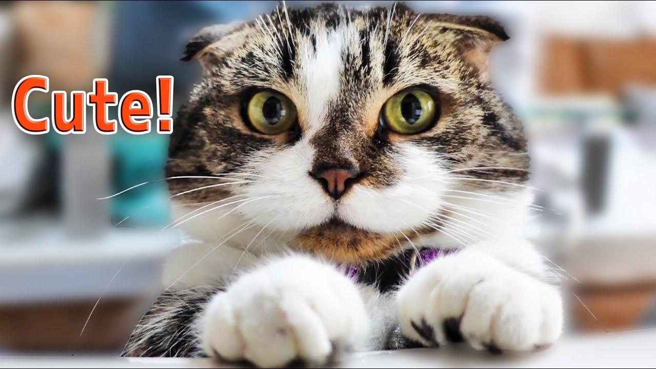 こんな可愛いおじさん猫はいかが? How do you like a cute senior cat?