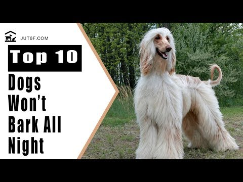 Best Apartment Dogs - Top 10 Quiet Dog Breeds That Will Not Bark All Night Long