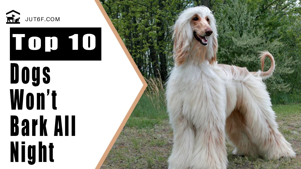 Best Apartment Dogs Top 10 Quiet Dog Breeds That Will Not Bark All Night Long