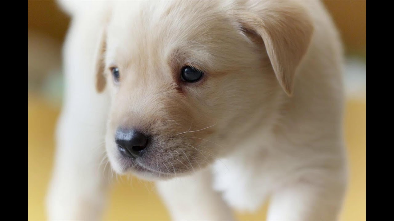 Puppy Opens Its Eyes For The First Time Puppy Senses Secret Life