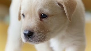 Puppy opens its eyes for the first time - Puppy Senses - Secret Life of Dogs - Earth